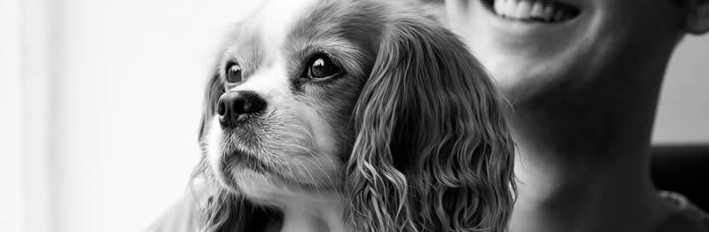 Dog at Vets image